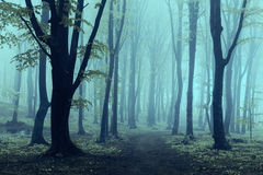 Névoa e luz na floresta Fotografia de Stock
