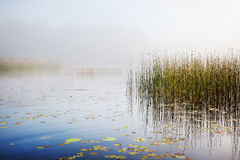 Névoa em um lago no alvorecer Foto de Stock Royalty Free