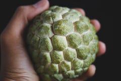 ny äpplecustard Fotografering för Bildbyråer