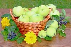 ny äpplekorg Arkivbild
