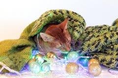 Ny Abyssinian katt för års` s med bollar och girlanden göra perfekt för annonsering, kort, lyckönskan på ett lyckligt nytt år, ju royaltyfria bilder