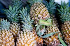 ny ananas royaltyfri foto