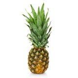 ny ananas Arkivbild
