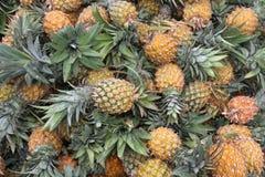 ny ananas Fotografering för Bildbyråer