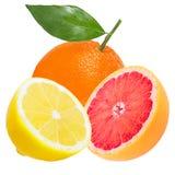Ny apelsin, citron och grapefrukt som isoleras på vit arkivfoton