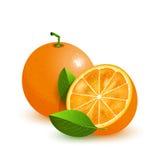 Ny apelsin med gräsplansidor som isoleras på vit Royaltyfri Fotografi