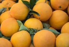 Ny apelsinbakgrund, nya frukter Royaltyfria Foton