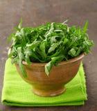 Ny arugula för grön sallad Arkivfoton