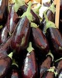 Ny aubergine Royaltyfria Foton