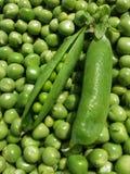 Ny bakgrund för fröskidor för grön ärta Royaltyfri Fotografi