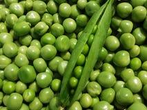 Ny bakgrund för fröskidor för grön ärta Arkivbilder
