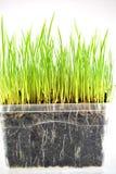 Ny bakgrund för grönt gräs Arkivbilder