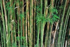 ny bambu arkivbilder