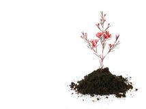 ny begreppstillväxtlivstid Fotografering för Bildbyråer