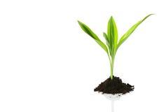 ny begreppstillväxtlivstid royaltyfri bild