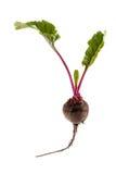 Ny beta med blast av grönsaken Arkivbild