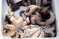 ny bläckfisk Arkivfoto