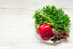 Ny blandad grön sallad och röd peppar Arkivfoton