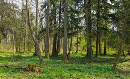 Ny blandad skogställning i vårsol Arkivbild