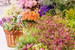 Ny blom- marknad, blom- bakgrund Arkivbilder