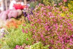 Ny blom- marknad, blom- bakgrund Royaltyfria Foton