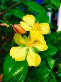 ny blomma Royaltyfria Bilder