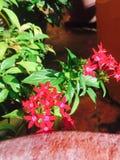 ny blomma Royaltyfria Foton