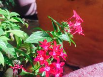 ny blomma Royaltyfri Bild