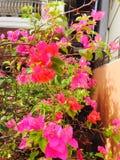 ny blomma Royaltyfri Fotografi