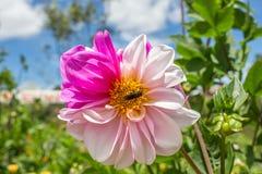 ny blomma Arkivfoto