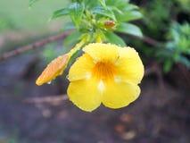 Ny blomma efter regn Royaltyfri Fotografi
