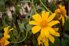 Ny blomma för natur i trädgården royaltyfria foton