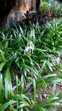 Ny blomma som blommar i trädgård under våren royaltyfri foto