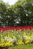 Ny blomma trädgård för blommor på våren Arkivbilder