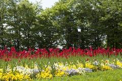 Ny blomma trädgård för blommor på våren Arkivbild
