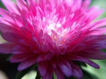 Ny blommacloseup Arkivbilder