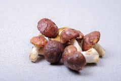 Ny bolete plocka svamp bakgrund Arkivbild