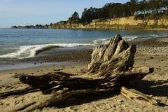 Ny Brighton State Beach och tältplats, Capitola, Kalifornien Royaltyfria Bilder