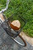 Ny brun kokosnöt i en cykelkorg Royaltyfria Bilder