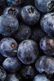 Ny bunt av blåbär Royaltyfri Foto