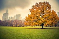 NY Central Park au jour pluvieux Photo stock