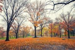 NY Central Park en la mañana lluviosa fotos de archivo