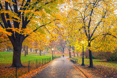 NY Central park at foggy morning Royalty Free Stock Images