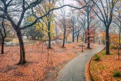 NY Central Park på den regniga dagen Royaltyfria Bilder