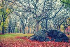NY Central park at rainy day Stock Photos
