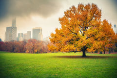 NY Central park at rainy day Royalty Free Stock Images