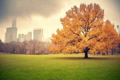 NY Central park at rainy day Stock Image