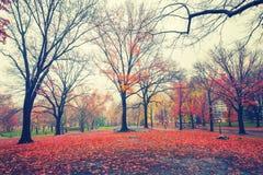 NY Central park at rainy morning Royalty Free Stock Photo