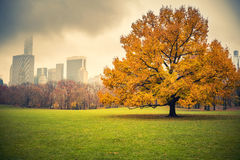 NY centrali park przy deszczowym dniem Zdjęcie Stock