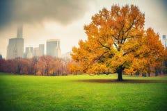 NY centrali park przy deszczowym dniem Obrazy Royalty Free